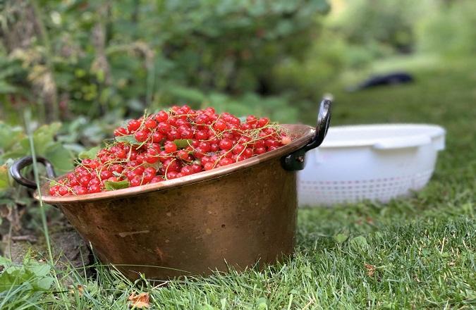 Marmeladentöpfe