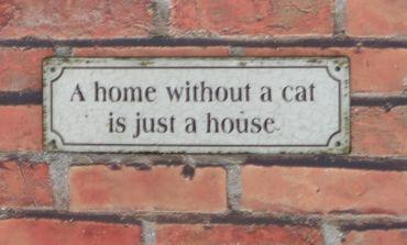 Blechschild  A home without a cat is just a house - Wandschild Shabby  – Bild 2
