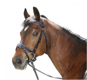 Standard Trensenzaum Braun für Ponys Nasen-und Stirnband unterlegt mit Gurtzügel