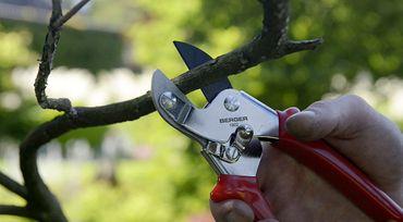 Berger Amboss-Schere auswechselbare beschichtete Klinge Länge 195 mm Gartenschere small ziehender Schnitt 260 g – Bild 8