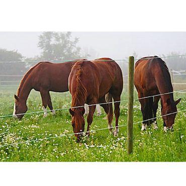 Premium Horsewire 250 m Ø 8 mm Leitfähigkeit 0,035 Ohm/m Pferdezaunsystem Zaundraht  – Bild 2
