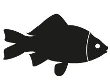 Kauartikel vom Fisch