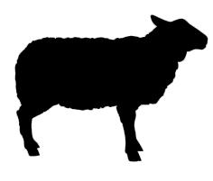 Kauartikel vom Lamm