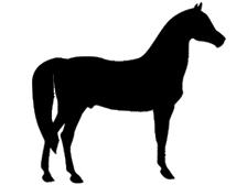 Kauartikel vom Pferd
