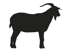 Kauartikel von der Ziege