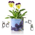 Erdbeere - Lavendel - Blumen in der Dose Geschenk Set von MacFlowers Bild 2