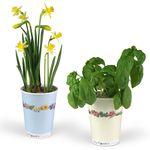 Gänseblümchen - Blumen im Becher TO GROW von MacFlowers Bild 2