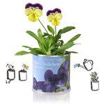 Edelweiss Österreich / Austria - Blumen in der Dose von MacFlowers Bild 2