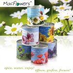 Cherry Tomato - Basilico - Blumen in der Dose Geschenk Set von MacFlowers Bild 4